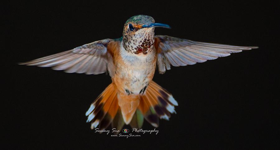 12-07-17-Humming-Birds-6281.jpg