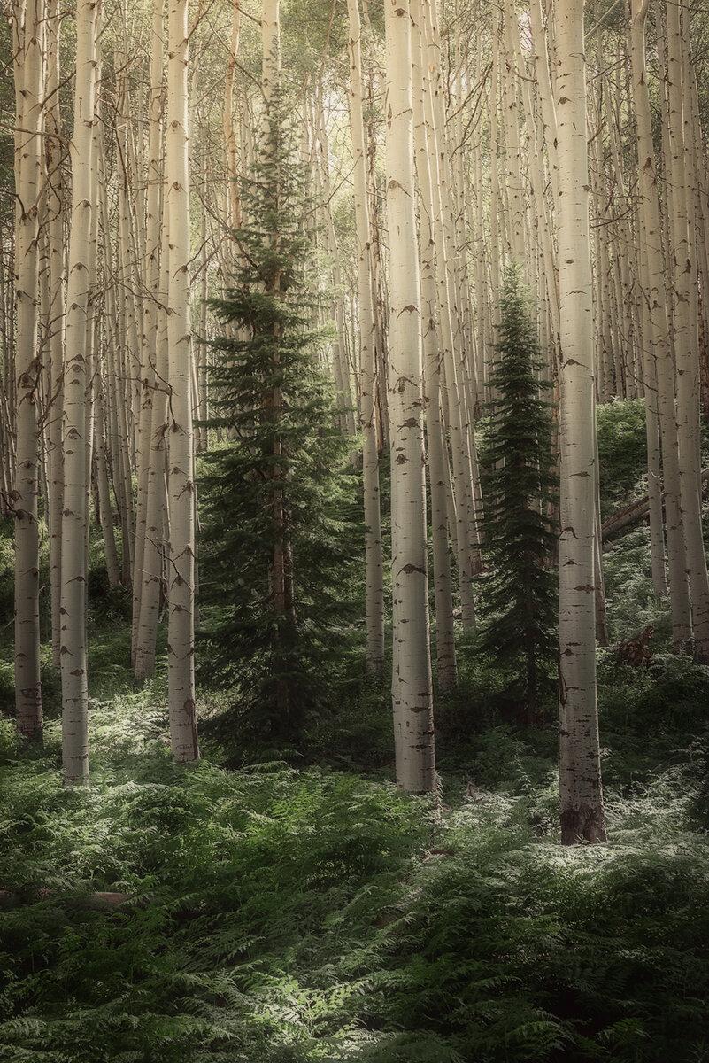 Aspen-Tress---2.1.jpg