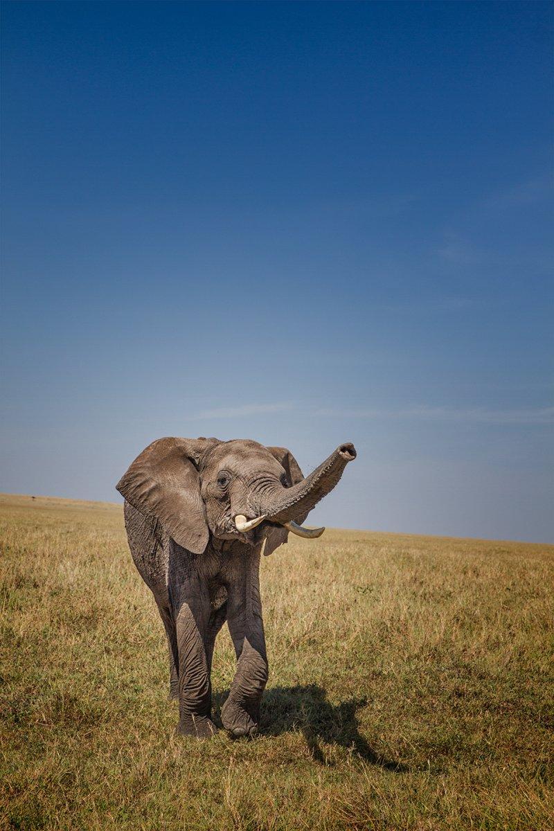 base-sniffing-elephant-1.jpg