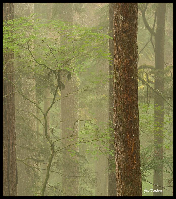 Downy-Creek_049.jpg