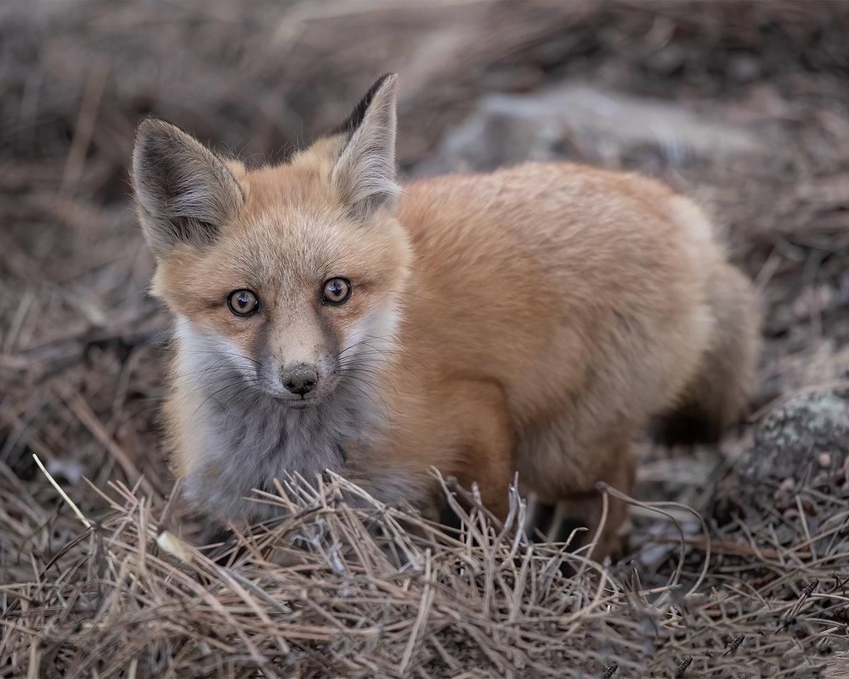Fox3-5.21CropNik.jpg