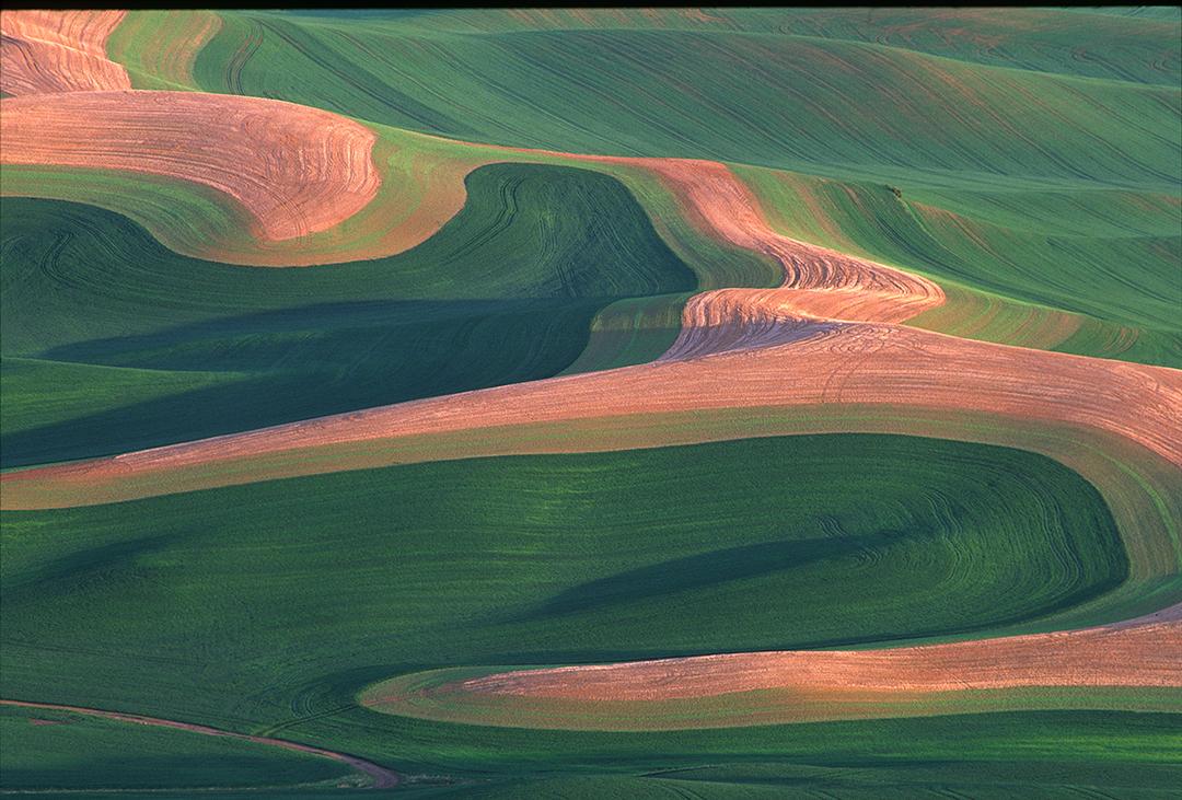 palouse hills III.jpg