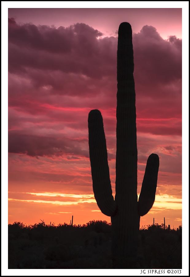 saguaorsunset1.jpg