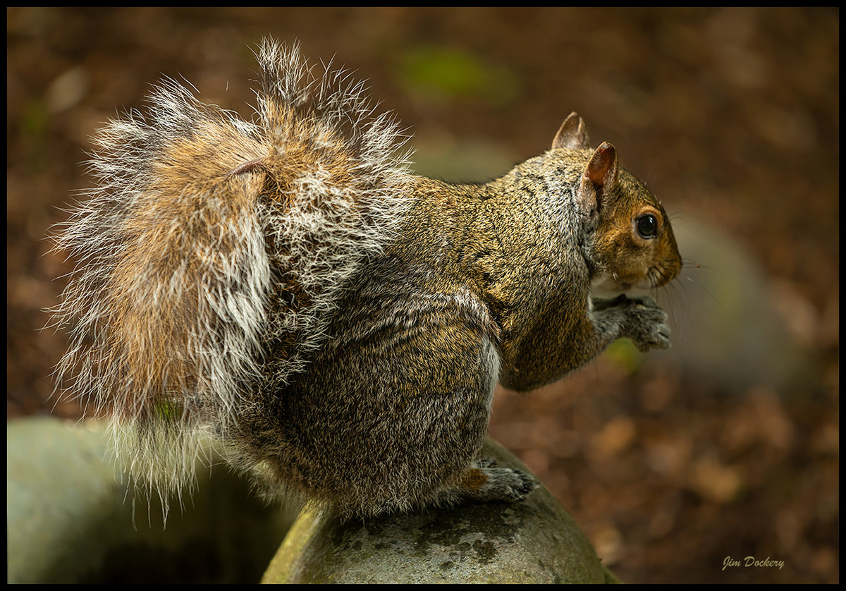 Squirrel-5.22.20-13.jpg