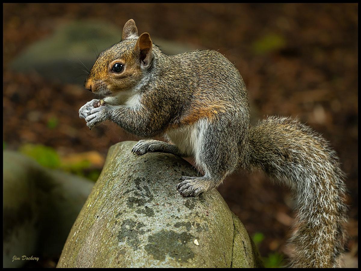 Squirrel-5.22.20-32.jpg