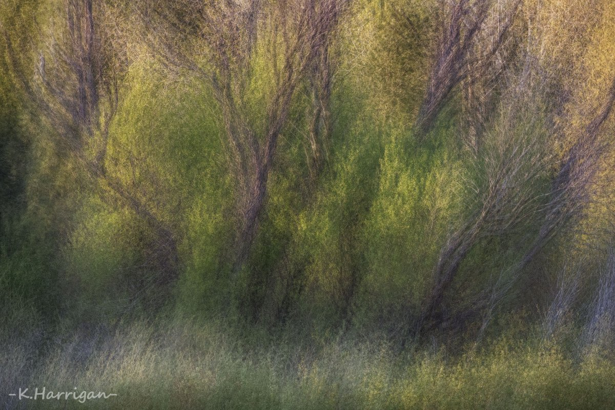 Untitled-21.jpg
