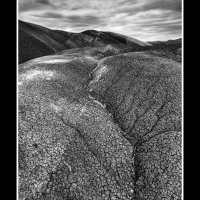 The-Cove-bw